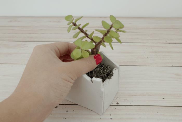 7 - plantar