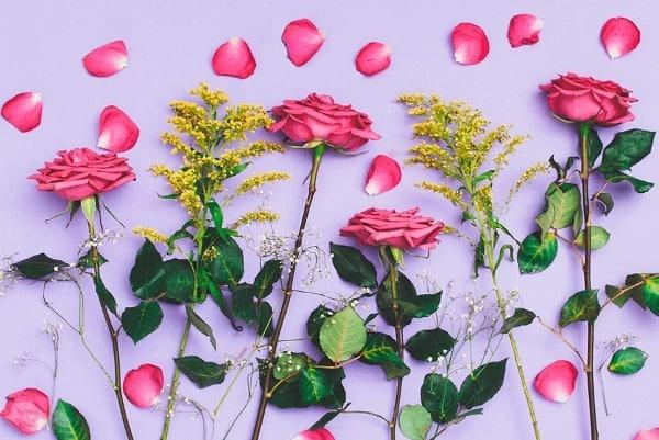 Flores da Natália Viana (6)