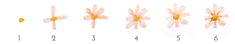 Passo a passo flor 1.1