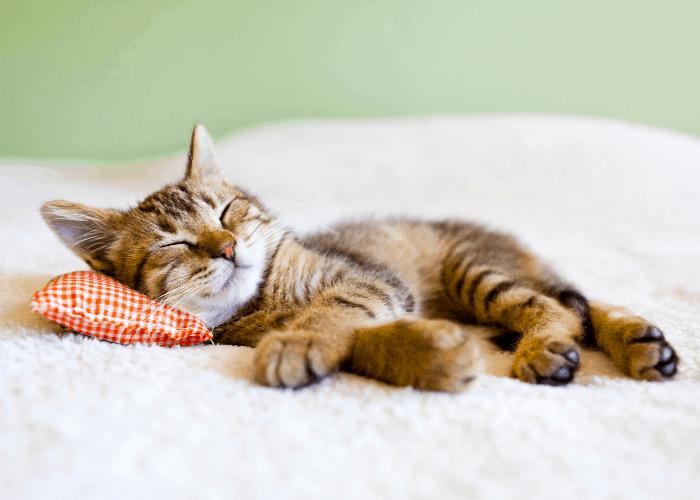 Como aliviar o estresse_ 5 dicas práticas de relaxamento